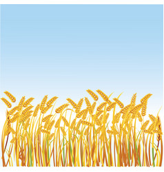 A field with realistic spikes vector