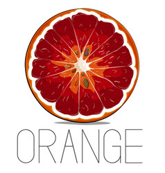 Juicy vitamin fruit orange citrus vector