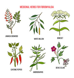 Best herbal remedies for fibromyalgia vector