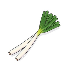 Japanese bunching onion vector