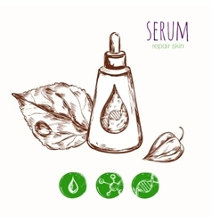 Serum leaf cosmetic concept vector