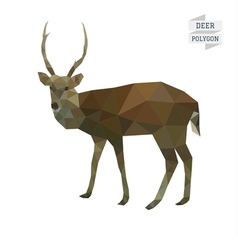 Deer polygon vector image vector image