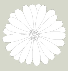 Flower white on background vector image