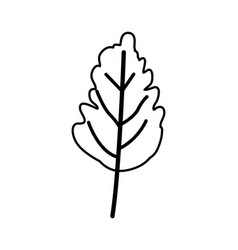 Sketch contour of wavy leaf plant vector