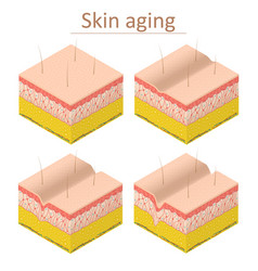 Skin aging set isometric view vector
