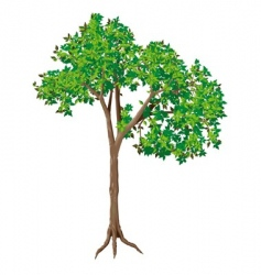 deciduous tree vector image vector image