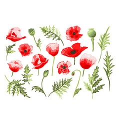 Hand drawn poppies set vector