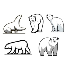 White polar bears set vector