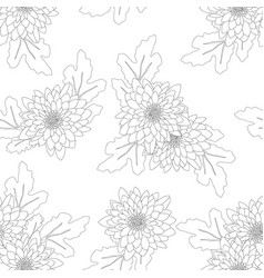 Chrysanthemum on white background vector