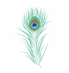 Peacock feather isolated vector