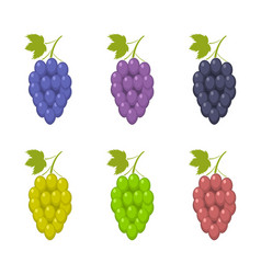 bunche of grape set vector image