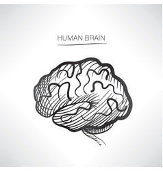 human brain sign isolated internal organ anatomy vector image