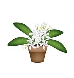 Beautiful white cape jasmine a terracotta pot vector