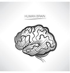 Human brain sign isolated internal organ anatomy vector