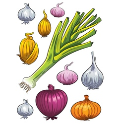 Onion collection vector
