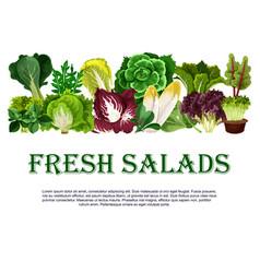 poster of fresh salads leafy vegetables vector image vector image
