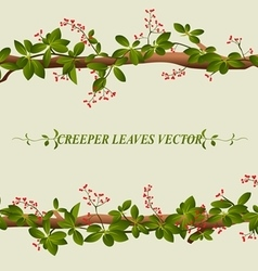 Border of creeper flower vector