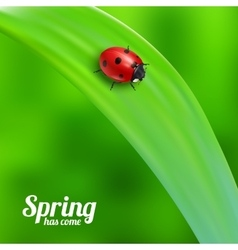 Ladybug on green grass vector