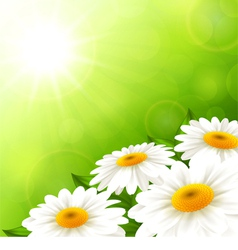 Camomiles on a green background vector