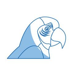 macaw amazon bird brazil wildlife image vector image