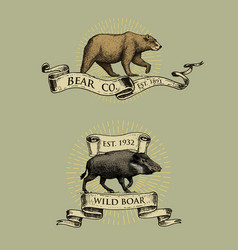 Bear and boar logos emblems or badges with wild vector