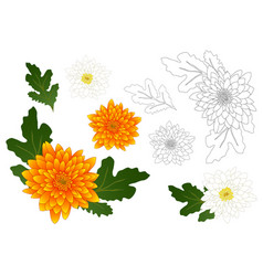 yellow and white chrysanthemum outline vector image vector image