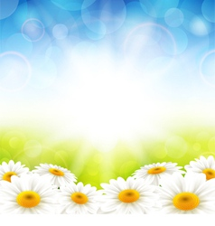 Flowers on the summer background vector image