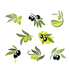 Green and black olives set vector