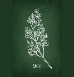 Chalk sketch of dill vector