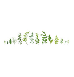 Designer elements set collection of green forest vector