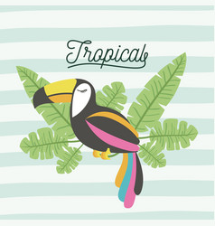 toucan bird tropical with leaves on decorative vector image