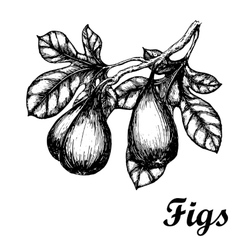 Hand drawn sketch with figs branch eco foods vector