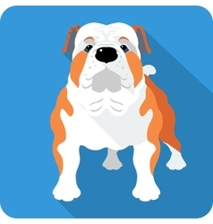 Dog english bulldog icon flat design vector