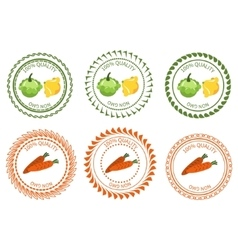 Logo squash and carrots design element package vector