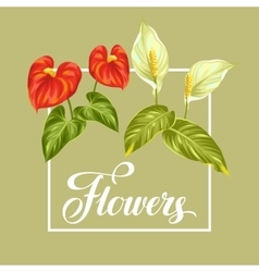 Greeting card with flowers spathiphyllum and vector