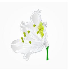 blossoms white rhododendron eleven mountain shrub vector image