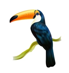 Toucan sitting on twig realistic image vector