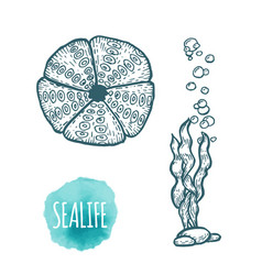 Sea urchin drawing on white background hand drawn vector