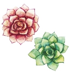 Nice watercolor succulents vector