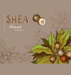 Background with shea nuts and branch vector