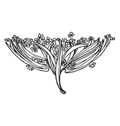 Floral tailpiece have small flowers and long vector