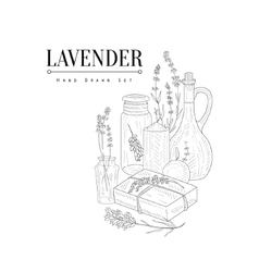 Lavender natural cosmetics hand drawn realistic vector