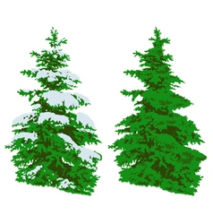 Pine tree in winter and summer on white vector