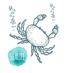 Crab drawing on white background hand drawn vector