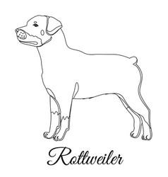 rottweiler dog outline vector image vector image