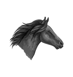 Black stallion horse sketch with racehorse head vector