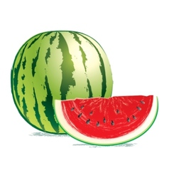 tasty fresh watermelon vector image vector image