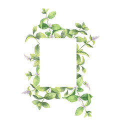 watercolor frame of mint branches isolated vector image vector image
