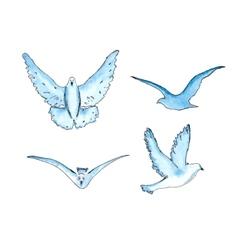 series of watercolor drawn birds vector image