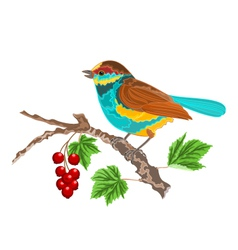 Birdie-on-the-currant vector